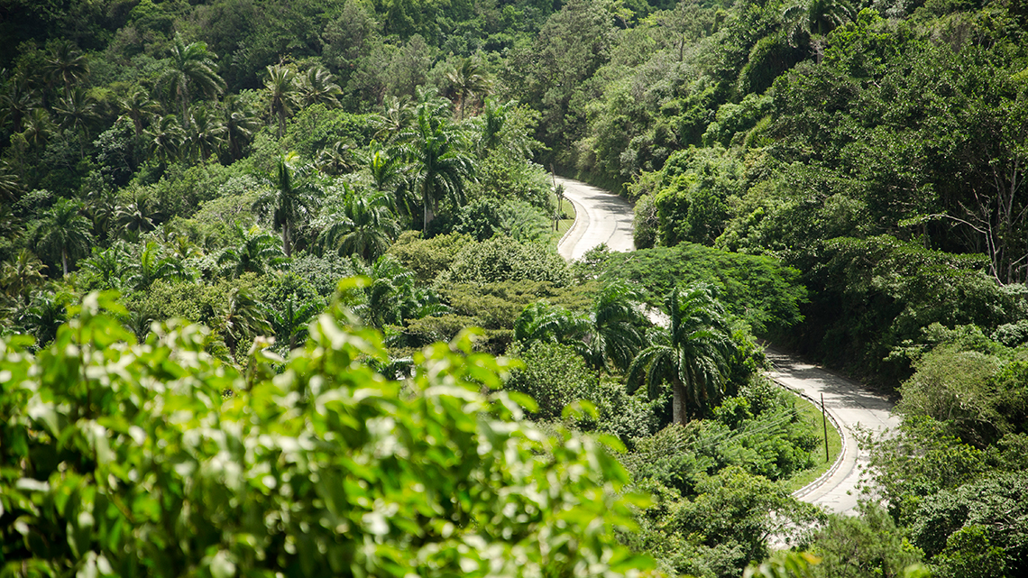Road mixed with the exhuberant vegetation around Humboldt National Park in Guantanamo