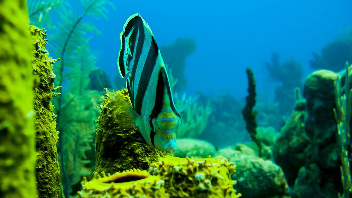 Rich, unspoilt marine life in Jardines de la Reina