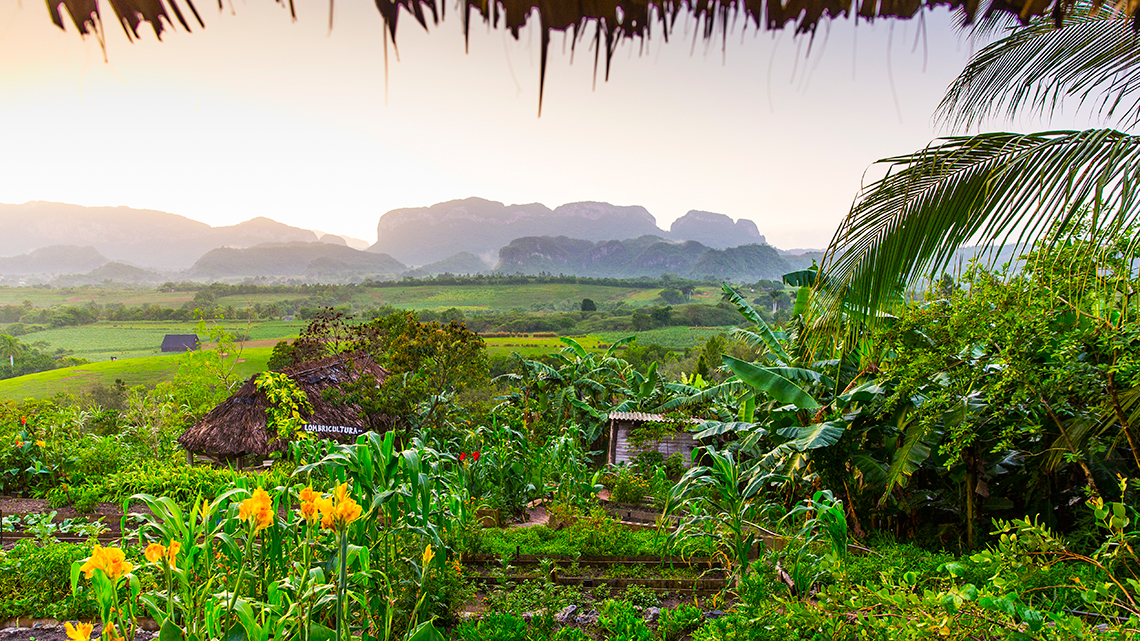 Valley of Viñales, a World Heritage Site of Jurassic limestone humps embedded with dinosaur relics
