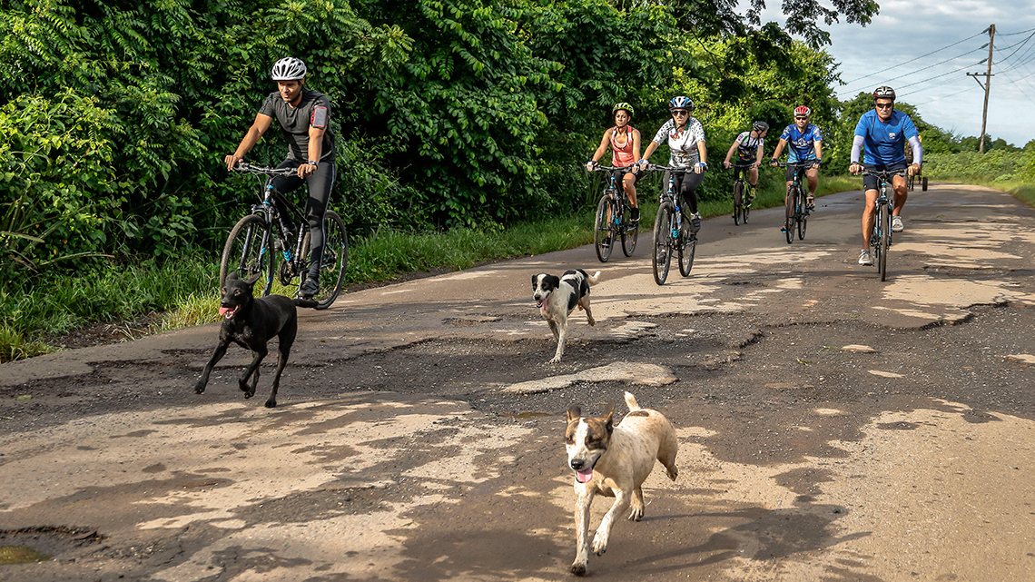 Local dogs join and welcome some cyclist touring the country roads of Western Cuba