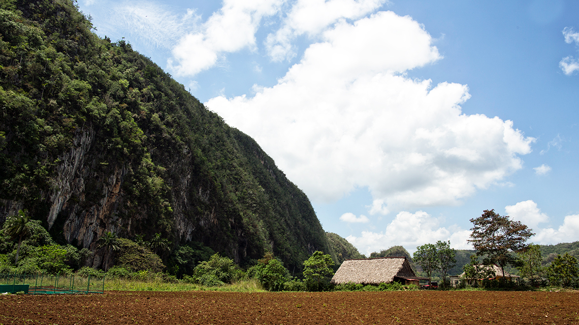 Tobacco plantation seen from the road while on road trip in Vinales, Cuba