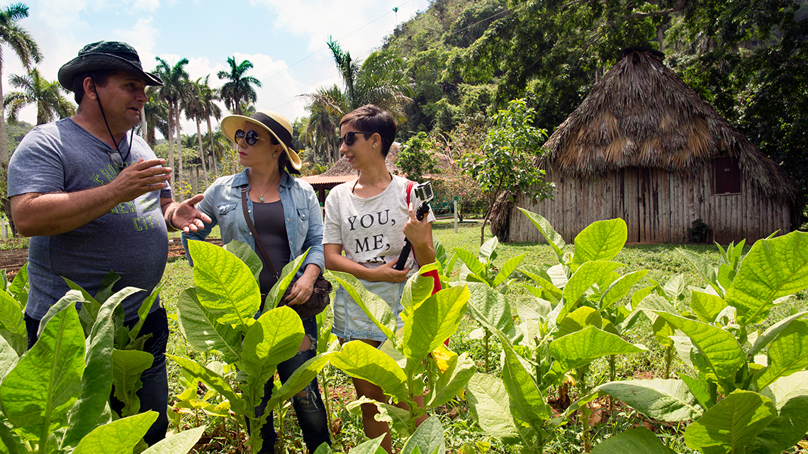 Farmer explain to tourist the cares needed to grow high quality tobacco in Vinales Valley