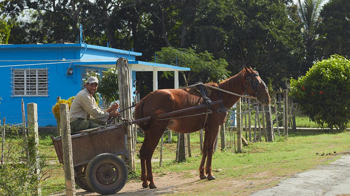 Cuban farmer getting ready with his horse drawn carriage