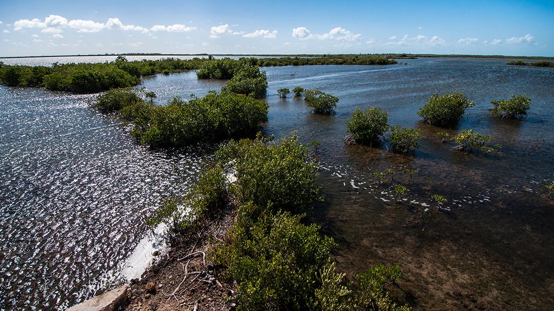 Swamps in Cienaga de Zapata in Matanzas province