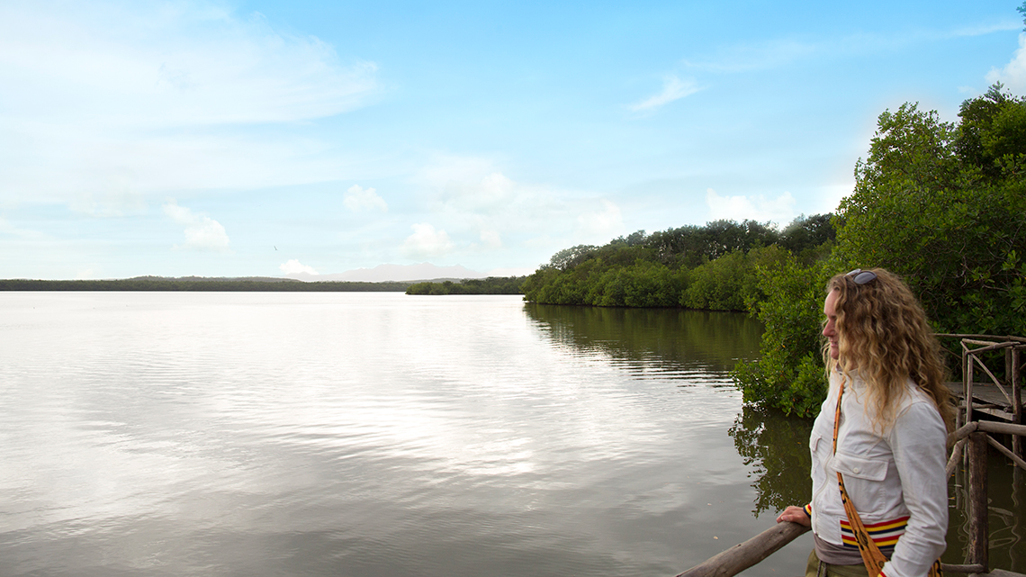 Tourist enjoys the view of mangroves in a lagoon near the sea in Caguanes Park