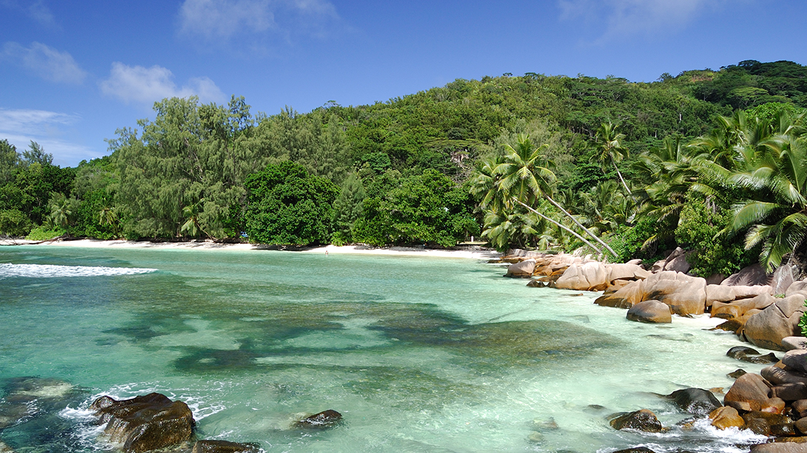 Palm trees lining the shores of Anse Severe in La Digue Island, Seychelles